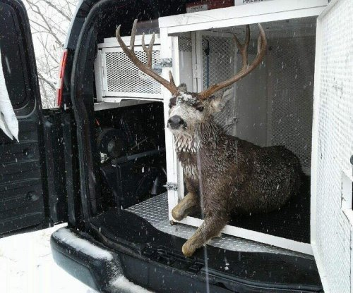 Colorado firefighters pull deer from frozen lake by an antler