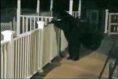 Bear climbs to Pennsylvania couple's back porch, raids bird feeder