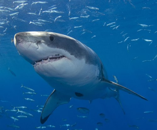 Santa Cruz, Calif., beaches shut down after shark attack