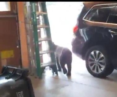 Bear chased out of Utah home sneaks back inside