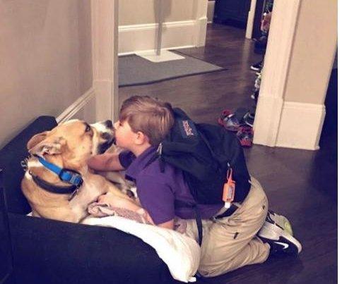 Kim Zolciak shares photo of son kissing family dog that attacked him