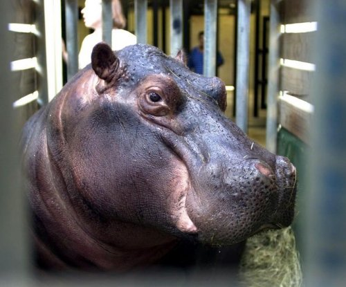 Police: Drunk man blamed injuries on hippo attack