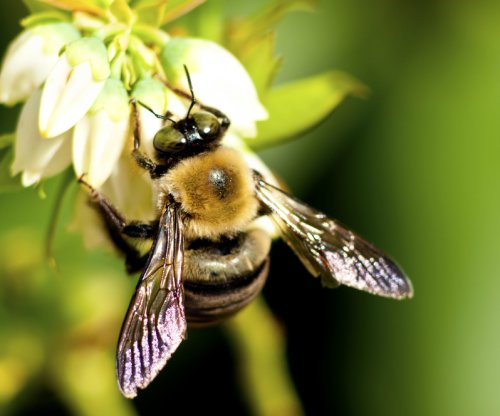 Honey bees could help scientists create new antibiotic