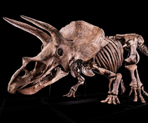 'Big John,' world's largest triceratops, sells for $7.7M