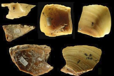 Tool-making Neanderthals dove for the perfect clam shell