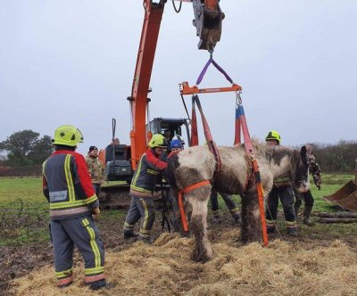 Horse stuck in fence hoisted back to its feet