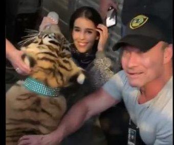 Owner surrenders tiger spotted in Houston neighborhood