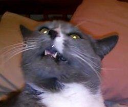 Ice-cream-loving cat afflicted by 'brain freeze'