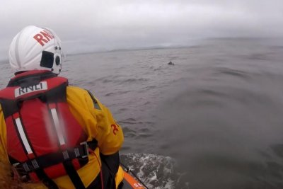 Disoriented horse rescued more than a mile off shore