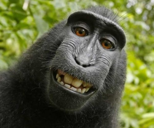 PETA sues to give monkey ownership of selfie