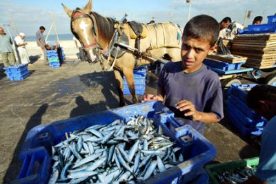 Missing fish: 30 percent of global fish catch unreported