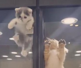 Kitten escapes pet store enclosure to visit puppy