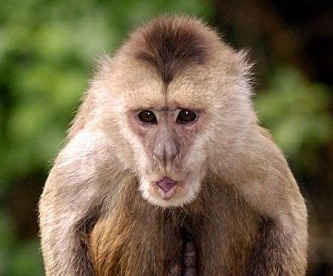 Israeli zoo searching for escaped monkey around Tel Aviv