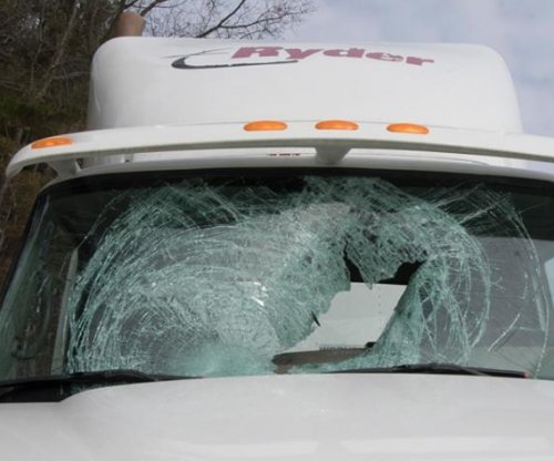 Turkey flew through New Hampshire truck driver's windshield