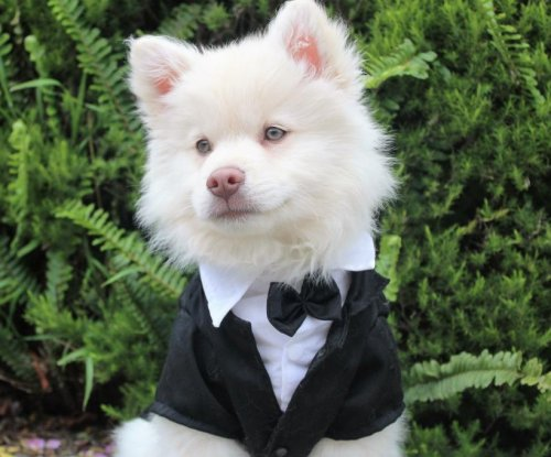 Ex-employee who used county credit card to buy dog tuxedo pleads guilty