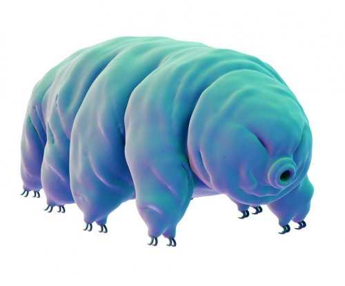 Tardigrades use protective protein to shield their DNA from radiation