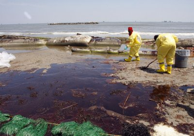 Four years after the Deepwater Horizon oil spill, wildlife still struggling
