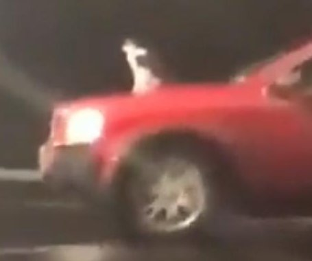 Owner says car-surfing cat in viral clip was enjoying the ride