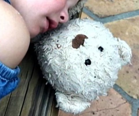 Family offers $500 for return of girl's lost teddy bear