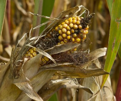 Ongoing drought in Brazil, Argentina threatens crucial crop harvests