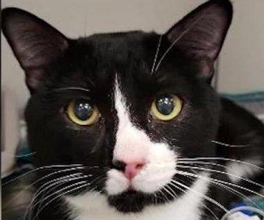 Minnesota cat survives 35-minute washing machine cycle