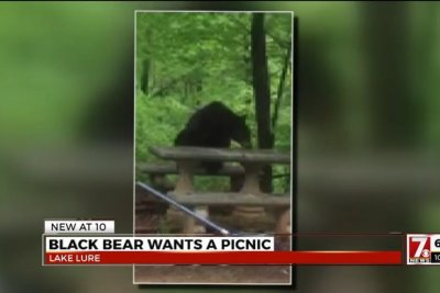 Bear takes a seat at North Carolina family's backyard picnic table