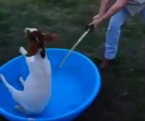 $13,000 offered for information on goat beheading video