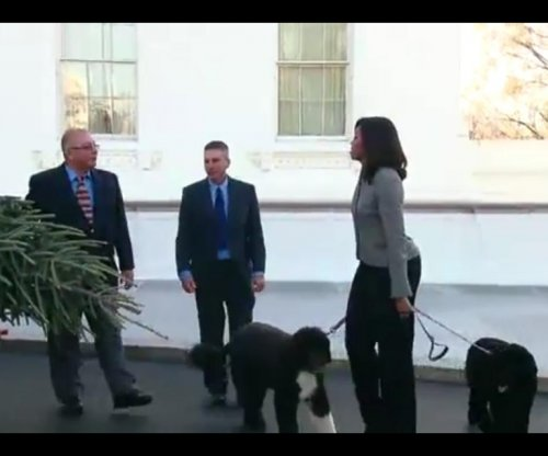 White House Christmas tree arrives from Pennsylvania