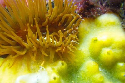 Scientists develop rapid cell lines for marine sponges