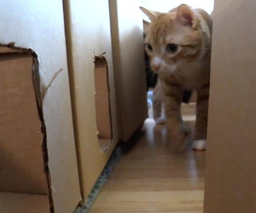 Cat owner turns 50 cardboard boxes into elaborate maze