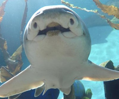 RELATEDStudy Sharks Have Personalities