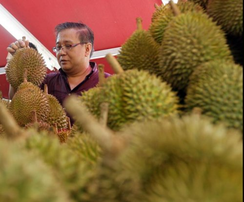 What gives the durian fruit its rotting stench?