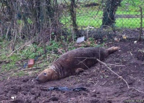 Seal found stranded 20 miles from sea