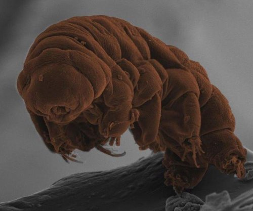 Tardigrade's DNA reveals water bears' secrets