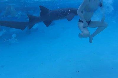 Shark's bite on snorkeling honeymooner caught on camera