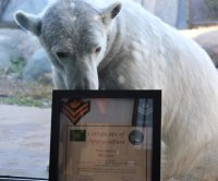 Canadian Army promotes polar bear to honorary master corporal
