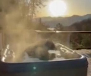 Black bear takes a relaxing soak in Tennessee cabin's hot tub