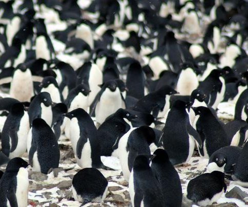 New penguin super-colony spotted from space