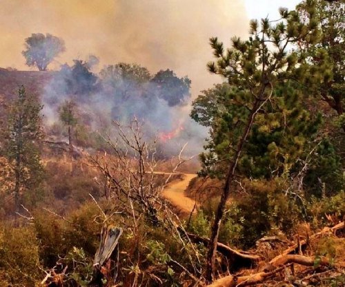 Illegal marijuana operations smoked out by growing 80,000-acre California wildfire
