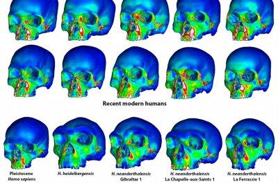 Study explains Neanderthal's uniquely shaped face