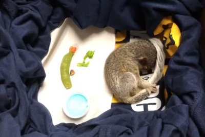 Police rescue baby squirrel, dub it 'Officer Nibbles'