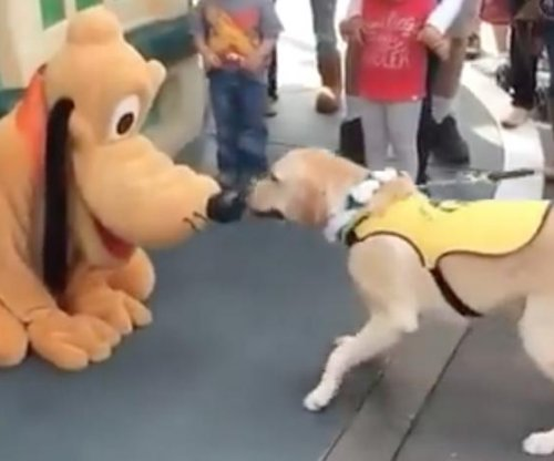 Service dog gets excited after meeting Pluto