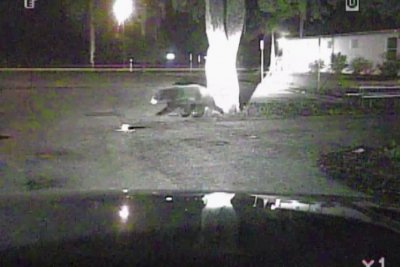 Florida police dashcam catches bear mid-garbage meal