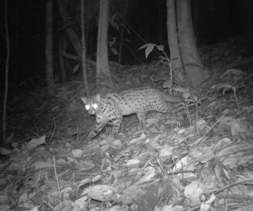 Logged forests are havens for endangered species in Southeast Asia