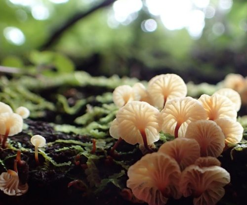 Fungi made life on Earth possible, researchers claim