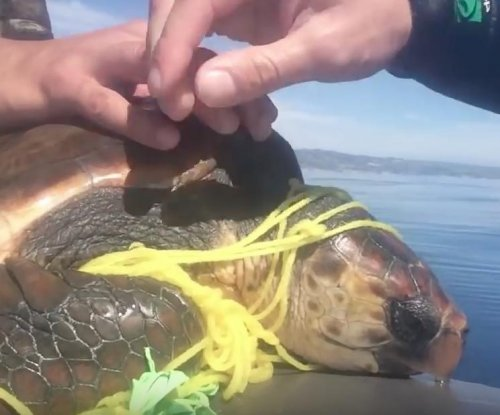 Jet skiers rescue sea turtle tangled in balloon string