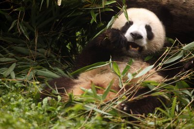 Canada-China trade mission nets two pandas