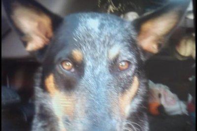 Dog missing in stolen car returned after two weeks