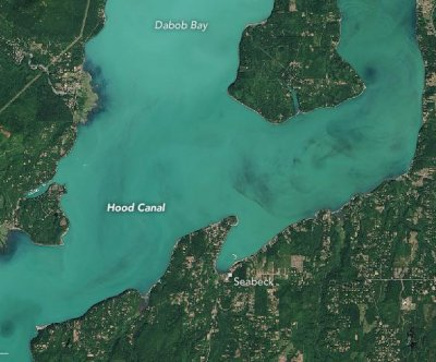 Phytoplankton bloom turns Washington state fjord milky