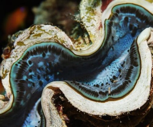 Ocean clams, worms release surprisingly large amounts of greenhouse gas
